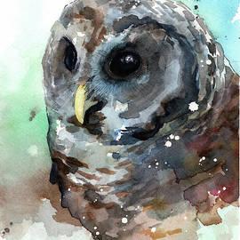 Little Owl by Sean Parnell