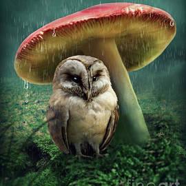 Elena Schweitzer - Little owl under mushroom