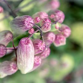 Little Pink Flowers by Sandi Kroll