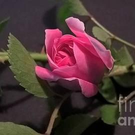 Jena Suits - Little Rose