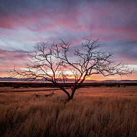 Little Tree Sunset by Wesley Aston