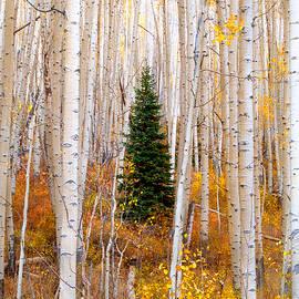 Tim Reaves - Little Tree