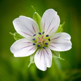 Devis Martusevicius - Little White Flower