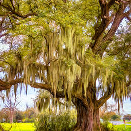 Live Oak and Spanish Moss - Paint by Steve Harrington
