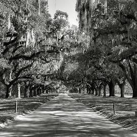 Live Oak Avenue II by Steven Ainsworth
