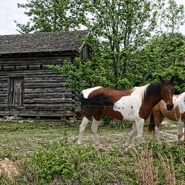 Livingston Cabin by Patricia Montgomery
