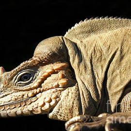 Lizard by Christian Hallweger