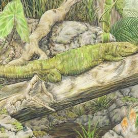 Stephanie Yates - Lizard in the Amazon