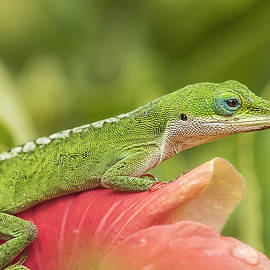 Lizard On Petal Perch by Bill Tiepelman