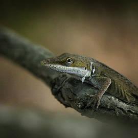 Reid Callaway - Pure Deception Lizard Wildlife Art