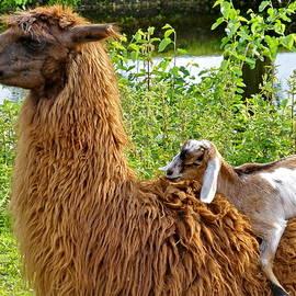 Lyuba Filatova - Llama and Goatling