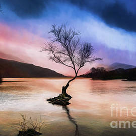 Adrian Evans - Llanberis Lake Tree