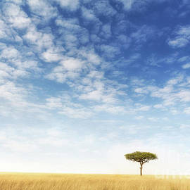 Lone acacia tree in the Masai Mara - Jane Rix