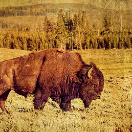 Lone Bison by Steven Bateson