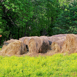 Lone Cow Guard, Smith Mountain Lake by The American Shutterbug Society