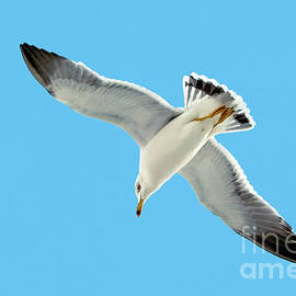 Lone Florida Seagull On Beach Patrol 727b by Ricardos Creations