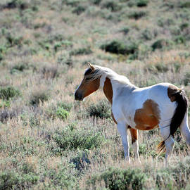 Denise Bruchman - Lone Mare in the Sage