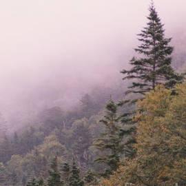 Lone Pine by Steve  Gass