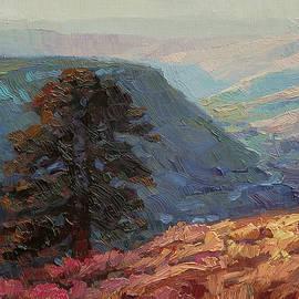 Lone Pine by Steve Henderson