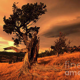 Lone Pine Whaleback Ridge by Bob Christopher