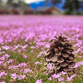 Pinecone In Pink by Brian Eberly