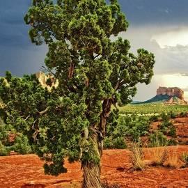 Flying Z Photography By Zayne Diamond - Lone Sentinel With A View, Sedona, Arizona