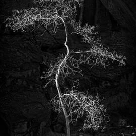 Lone tree - Niall Whelan