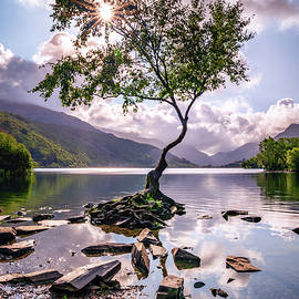 Lone Tree Of Llanberis by Framing Places