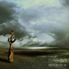 Franziskus Pfleghart - Lonely Death