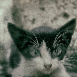 Lonely Kitten #3 by A Cappellari