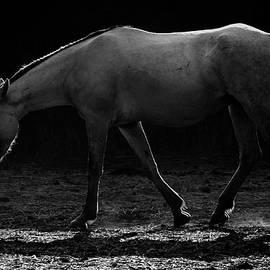 Michael Osborne - Lonely Mustang