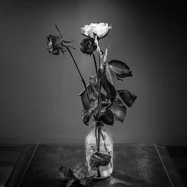 Youshij Yousefzadeh - Lonely Roses