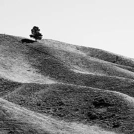 Lonely tree by Andy Holt