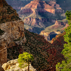 Levin Rodriguez - Lonely Tree at Grand Canyon