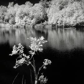 Igor Aleynikov - Lonely tree in infrared