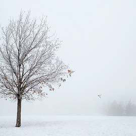 Lonely Winter As The Birds Return