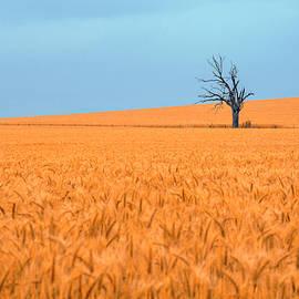 Petar Belobrajdic - Lonesome tree