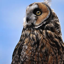 Long eared owl in meadow with blue sky by Georgia Evans