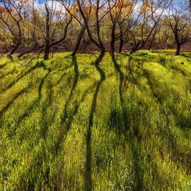 Long Shadows by Debra and Dave Vanderlaan