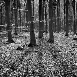Long Shadows by Inge Riis McDonald