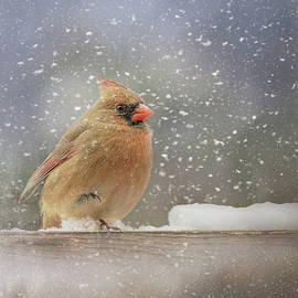 Longing For Snow Boots Bird Art by Jai Johnson