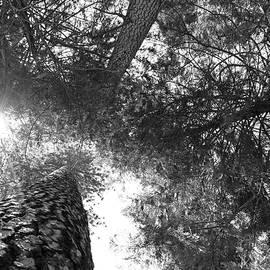 Sierra Vance - Look Up Black and White
