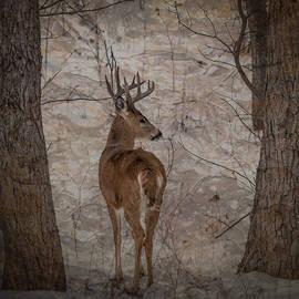 Patti Deters - Looking Back Buck