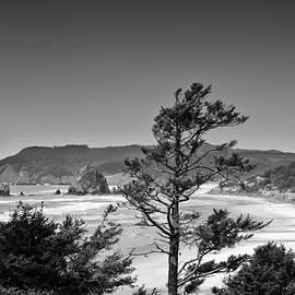 Looking North to Cannon Beach by David Patterson