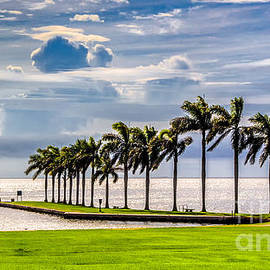 Looking out the Deering Estate by Rene Triay Photography