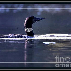 Loon on the Lookout, Framed by Sandra Huston