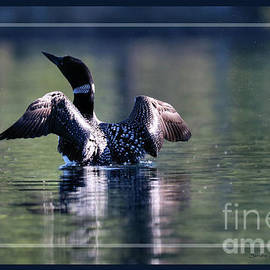 Loon with Open Wings by Sandra Huston