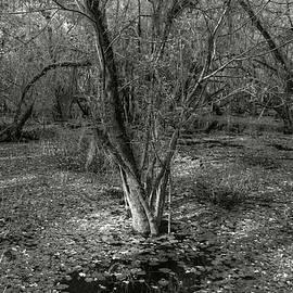 Loop Road Swamp #3 by Michael Kirk