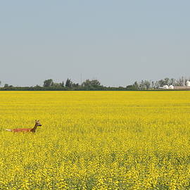 Lost in a Sea of Yellow by Ed Mosier