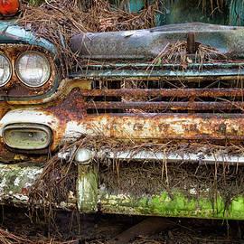 Lost in Woods by Marzena Grabczynska Lorenc